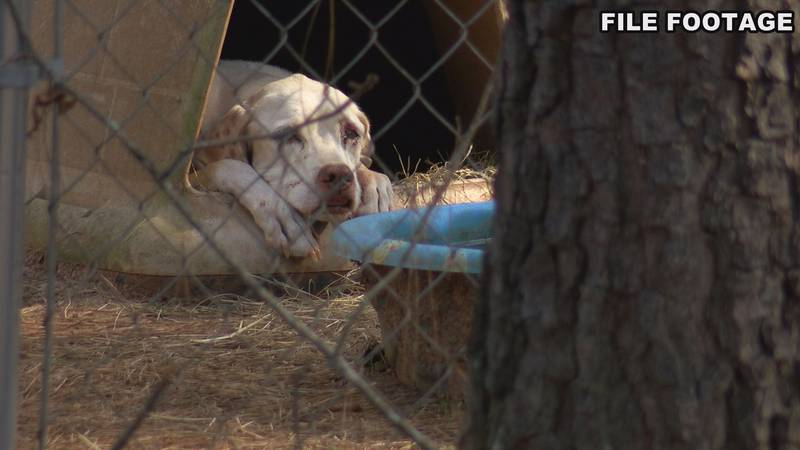 Officials say now is the time to make safety plans for your pets for hurricane season.