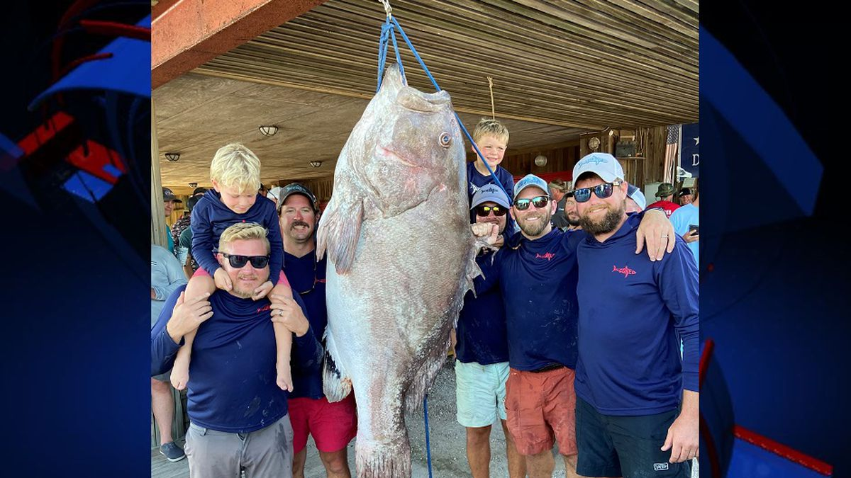 The Rezoned Fishing Team caught this massive Warsaw Grouper at the ABC Fishing Tournament in Carrabelle.