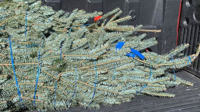 Veterans can pick up free Christmas trees Saturday at the Hootch at Lake Ella.
