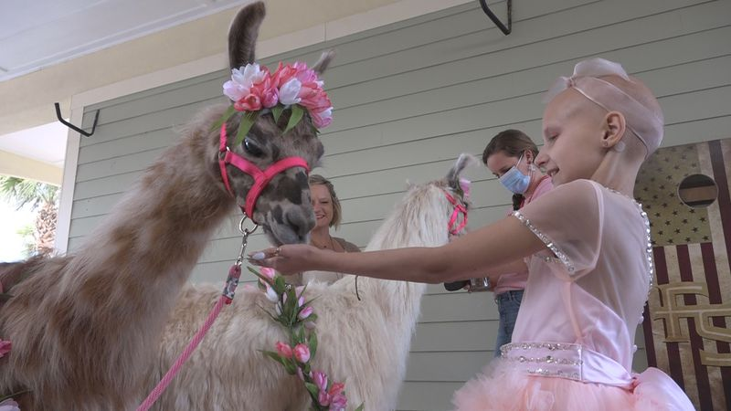 Izzy has another birthday wish granted: a llama birthday party.