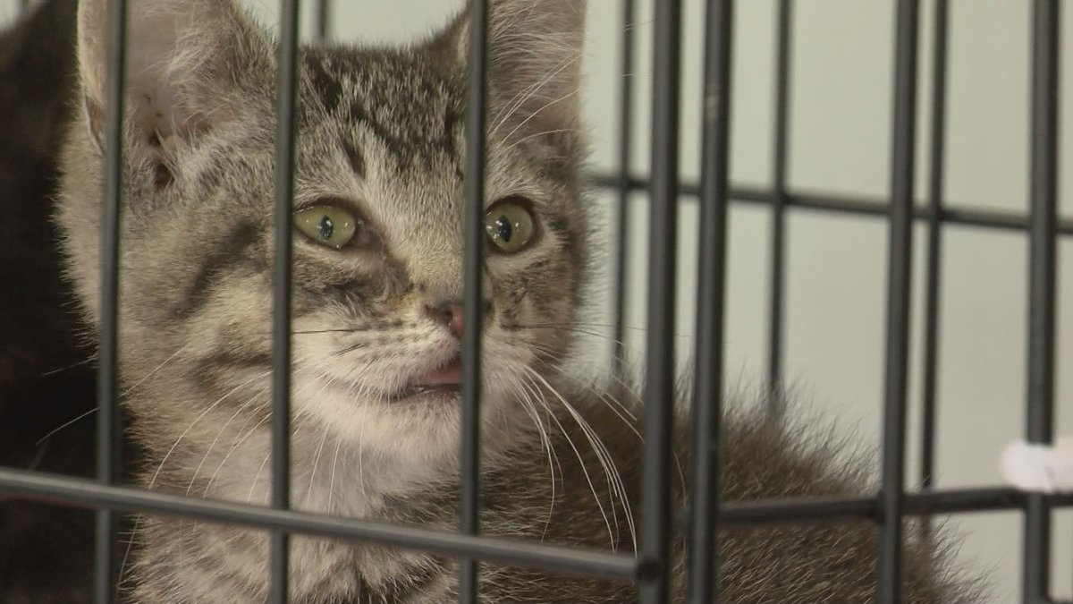 The City of Tallahassee's Animal Service Center will be offering low-cost rabies vaccines as...