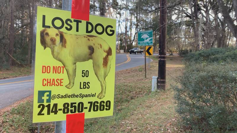 A beloved bird dog, Sadie, on the loose in Tallahassee has her human parents going the extra...
