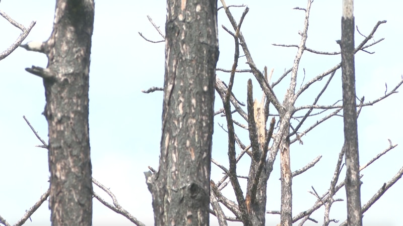 Three years ago Thursday, the city of Eastpoint was devastated by a wildfire.