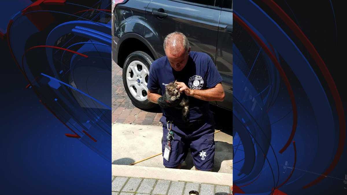 Saturday, Thomasville Fire Rescue saved a kitten from a car in downtown Thomasville.