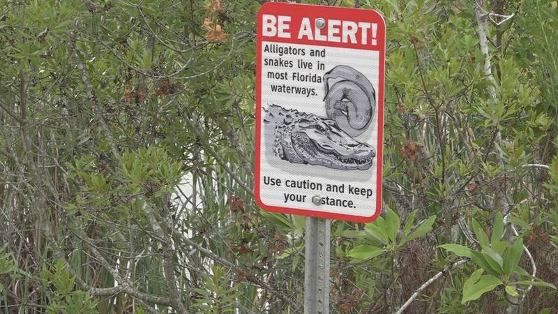 Dog park goers in Leon County are doing their best to avoid water moccasins, or cottonmouths,...