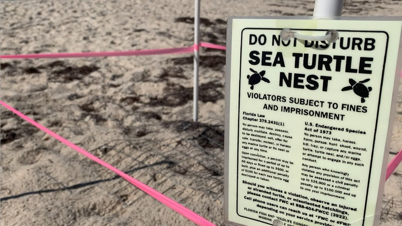 It's the season for toes in the sand at Forgotten Coast beaches, but for the next six months,...
