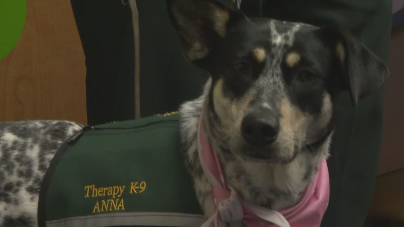 Anna is the first therapy K9 in the panhandle.