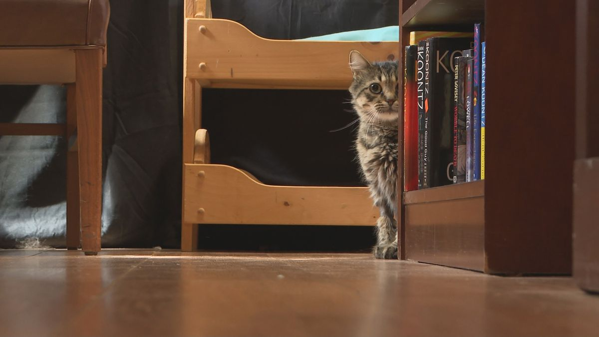 The Feline Advocates of Leon County opened a new book store earlier this month in Railroad Square