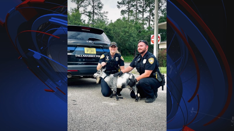 Two Tallahassee police officers got an unexpected call on Saturday when they were asked to try...