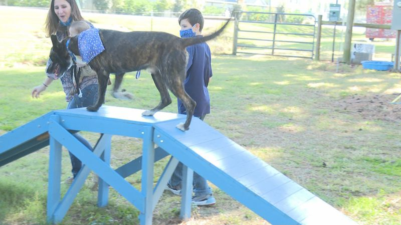 It's hard to believe, but one lovable dog spent more than 400 days at a Thomasville shelter.
