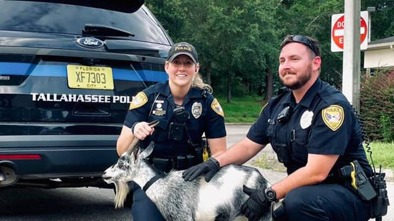 Two Tallahassee Police Department officers were in for a surprise Saturday afternoon when they...