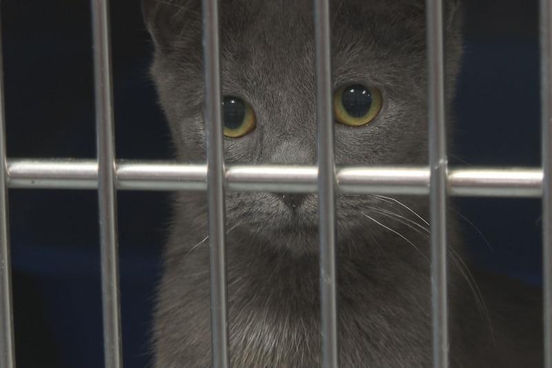 Thomasville-Thomas County Humane Society offering $21 adoptions through Saturday