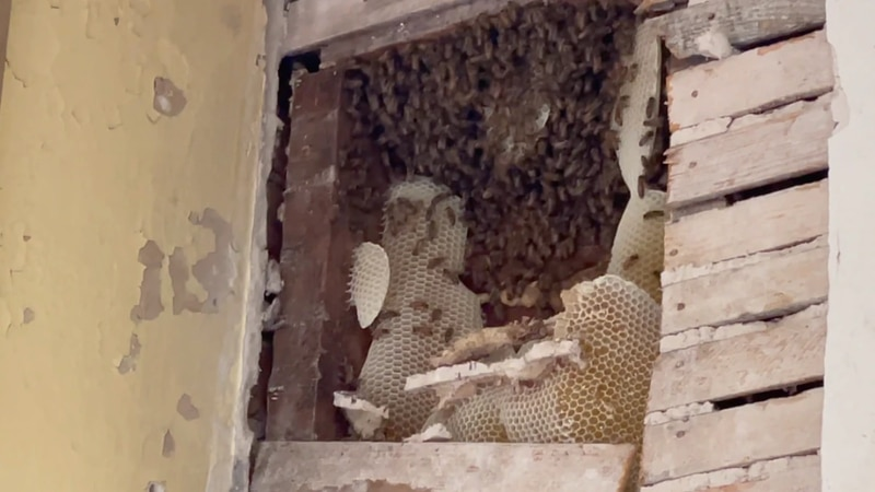 Lowndes County's Public Works employees found a big surprise when they noticed some bees flying...