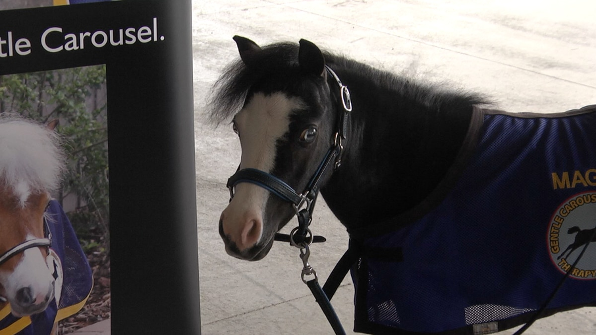 Magic is one of the horses making people smile.